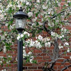 Spring Flowers Around Lamp Post